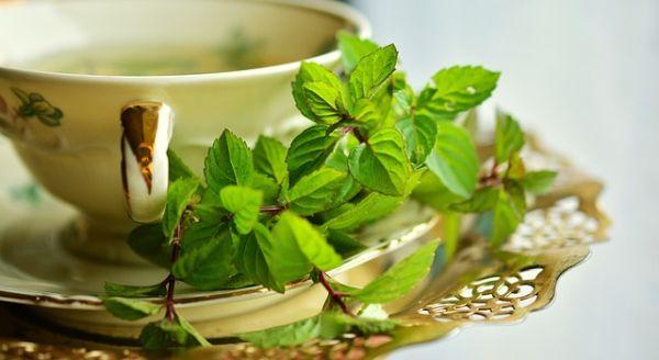 Cara Diet Alami Menggunakan Daun Mint